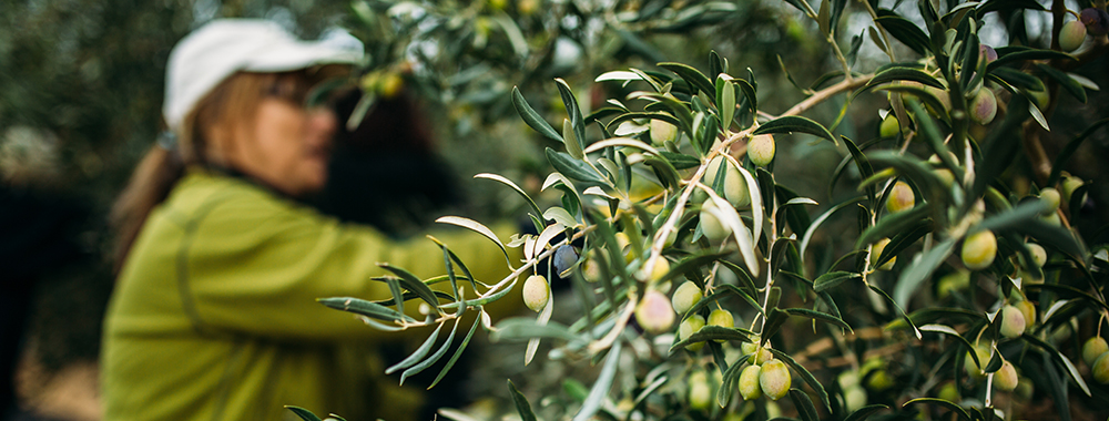 Woman in olive grove